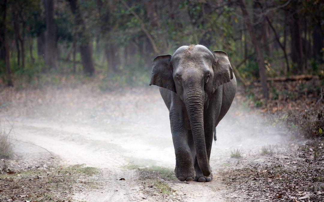 Vi har en elefant i kirken!